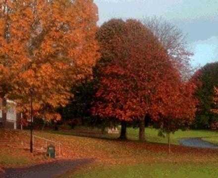 Milton Front Autumnal Trees 2012